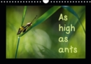 As high as ants 2019 : macrophotographs of insects of the Pyrenees - Book