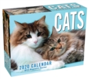 Cats 2020 Mini Day-to-Day Calendar - Book