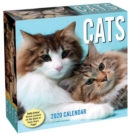 Cats 2020 Day-to-Day Calendar - Book