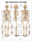 The Skeletal System Anatomical Chart - Book