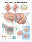 Anatomy of the Brain Anatomical Chart - Book