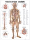 The Nervous System Anatomical Chart - Book