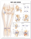 Hip and Knee Anatomical Chart - Book