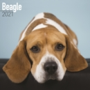 Beagle 2021 Wall Calendar - Book