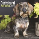 Dachshund Wire Haired 2021 Wall Calendar - Book