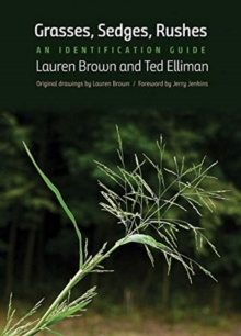 Grasses, Sedges, Rushes : An Identification Guide, Paperback / softback Book