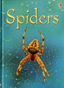 Spiders, Hardback Book