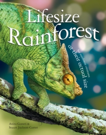 Lifesize Rainforest, Hardback Book