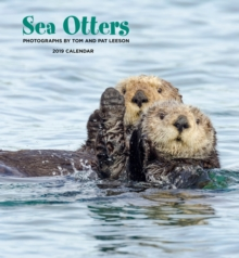 Sea Otters 2019 Wall Calendar, Calendar Book