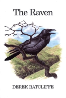 The Raven : A Natural History in Britain and Ireland, Hardback Book