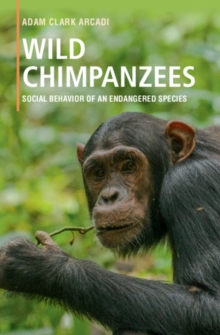 Wild Chimpanzees : Social Behavior of an Endangered Species, Hardback Book