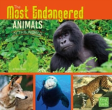 The Most Endangered Animals in the World, Paperback Book