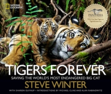 Tigers Forever : Saving the World's Most Endangered Big Cat, Hardback Book