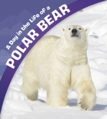 A Day in the Life of a Polar Bear, Paperback / softback Book