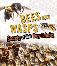 Bees and Wasps : Secrets of Their Busy Colonies, Paperback / softback Book