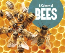 A Colony of Bees, Paperback / softback Book