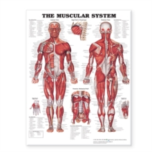 "The Muscular System Giant Chart Laminated : 42"" x 62"" chart, Poster Book"