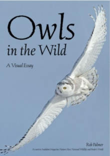 Owls In The Wild : A Visual Essay, Paperback / softback Book