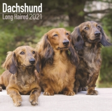 Dachshund Long Haired 2021 Wall Calendar, Calendar Book