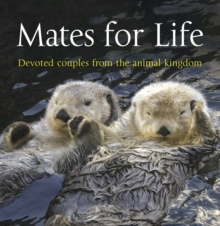 Mates for Life : Devoted Couples from the Animal Kingdom, Paperback Book