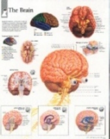 Brain, Wallchart Book